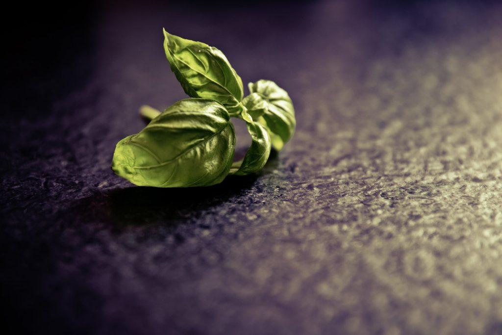 Zioła – naturalne afrodyzjaki dla mężczyzn
